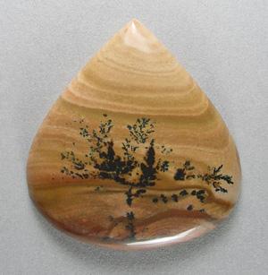梨果实石细胞结构图